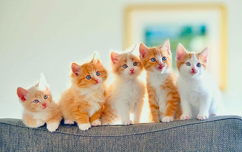 7  موردی که گربه شما به آن علاقه دارد